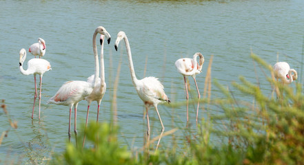 Beautiful Flamingo Birds 3