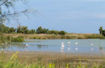 Beautiful Flamingo Birds 7