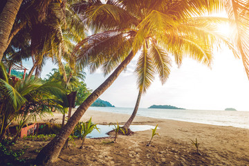 Beautiful tropical beach with palm trees. Daylight
