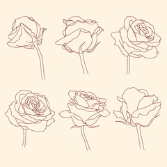 Rose flowers linear graphic drawing set