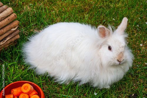 Kaninchen Im Garten Als Haustier Stock Photo And Royalty Free