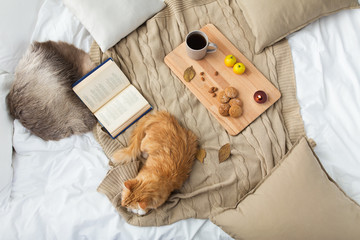 Fototapete - pets, hygge and domestic animal concept - red tabby cat lying on blanket with book, lemon tea and oatmeal cookies at home in winter
