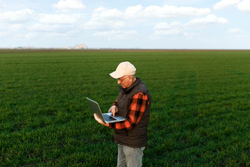 Senior farmer in filed examining young wheat corp and looking at laptop.