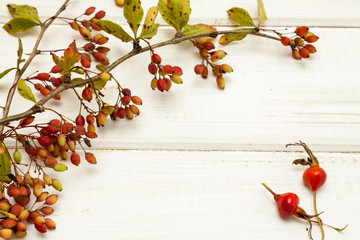 Autumnal bough berberis on wooden background.