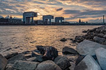 Kranhäuser, Kölner Dom und Severinsbrücke - Ausblick von den Poller Wiesen aus über den Rhein - Kölner Panorama bei Sonnenuntergang in Goldenen Farben