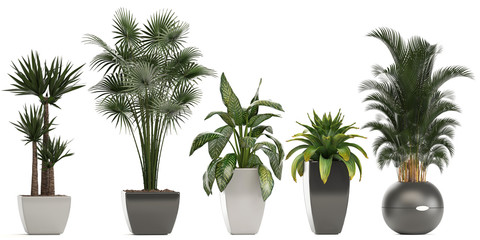 collection of ornamental plants in pots Fototapete