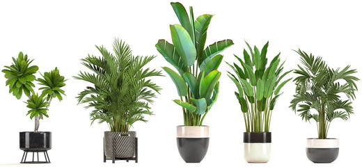 Door stickers Plant collection of ornamental plants in pots