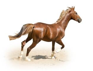 image of horse on white background