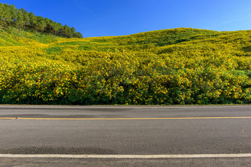 Asphalt road and flower field on blue sky in Thailand