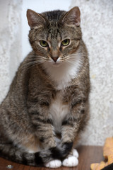 sad tabby cat in the shelter