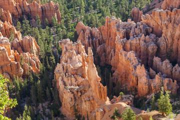 Bryce Canyon Hoodoo View