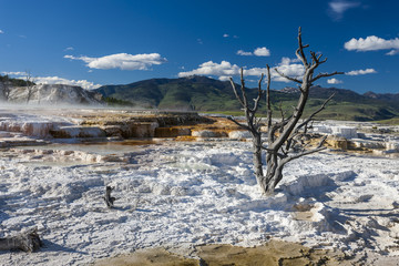 Mammoth Hot Spring Terrace Landscape
