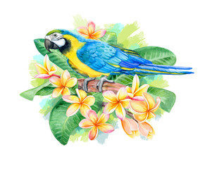 Blue and Gold Macaw Bird isolated on white background. Macaw Blue-and-yellow with Tropical flowers Frangipani, Plumeria. Parrot Flying. Illustration. Watercolor. Template. Close-up. Clip art.