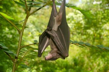 "bat is mammal and call ""vampire"""
