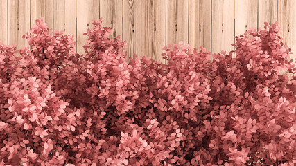 Beautiful pink background with leaves and wood texture, season of the year. 3d illustration, 3d rendering.