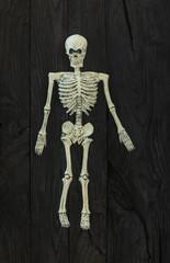 skeleton on a black wooden background