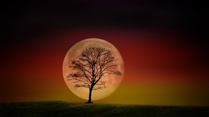 A tree against the backdrop of a great moon