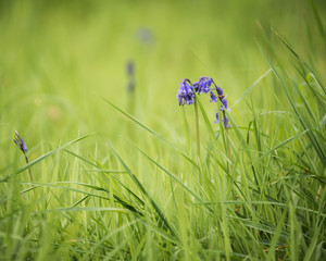blue flower in grass