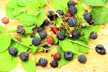 black raspberry with berries and leaves on boards