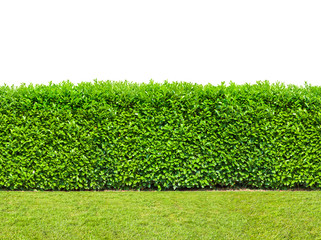 Tall  bush hedge with grass isolated on white. Seamless endless pattern. Wall mural