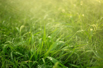 Fresh grass covered with rain drops and fog of small water drops in air backlit by sunset