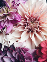 Fotorolgordijn Dahlia Dahlia's