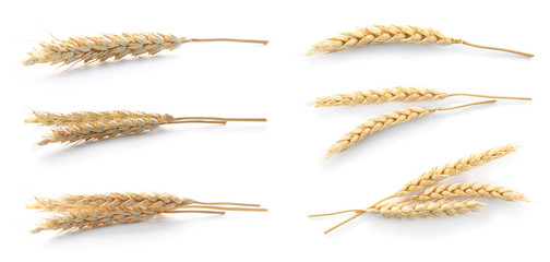 Set with spikelets on white background. Cereal grains