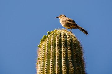 A lone bird on a cactus