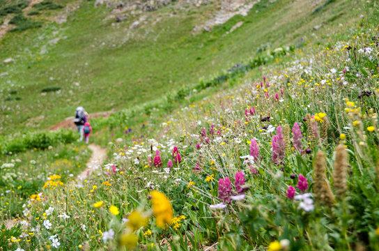 Hikers in a field of wildflowers