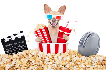 dog to the movies