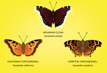 Butterfly Tortoiseshell Set Vector Illustration