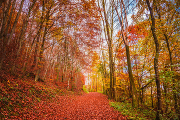 Beautiful orange and red autumn forest