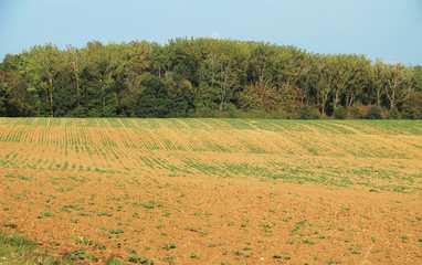 dry field with a few growing plants in summer, consequence of global warming, Czech Republic, August 2018