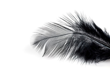 Close-up of Black feather isolated