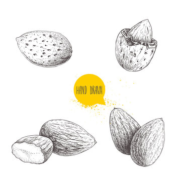 Hand drawn sketch style almond set. Single, group  seeds and almond in nutshell. Organic food vector illustrations collection isolated on white background.
