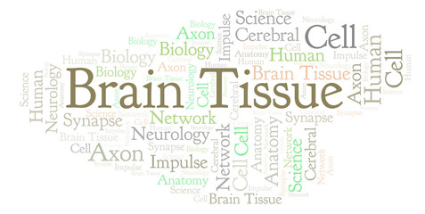 Brain Tissue word cloud.