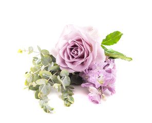 Purple rose flower and green leaves