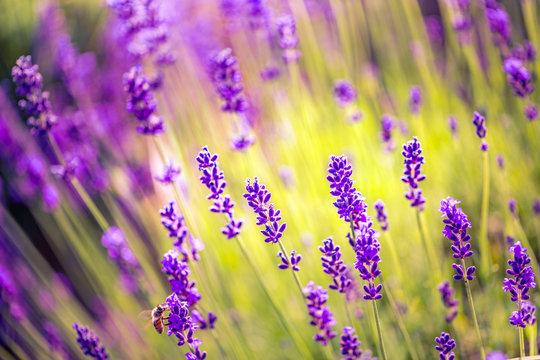 Summer flowers landscape, calming meadow and flowers field.