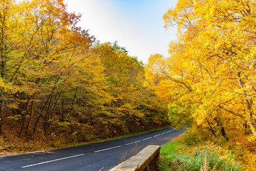 Beautiful autumn road, colorful leaves and soft blue sky