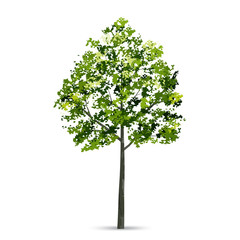 Tree isolated on white background with soft shadow. Natural object for landscape design. Vector.