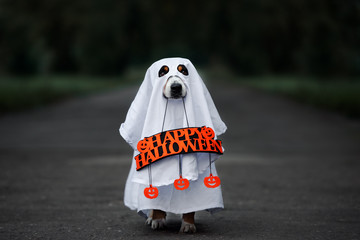 dog in a ghost costume holding a happy halloween sign outdoors at night
