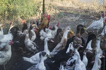 The birds farm.