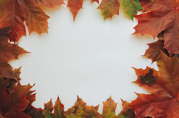 Fall maple leaves frame. Autumn background concept. Border, copy space, September, October, November