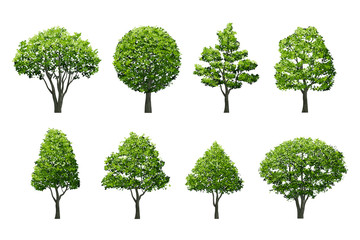 Tree isolated on white background with clipping path. Use for landscape design, architectural decorative. Illustration graphic.