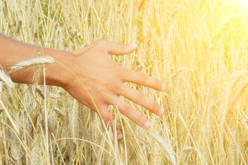 wheat field with hand and sunshine