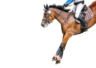 Jumping horse with a rider isolated on white background. Show-jumping.  Fototapete