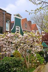 Zaanse Schans, Niederlande, Holland, Magnolien