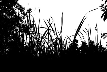 Realistic grass silhouettes from nature