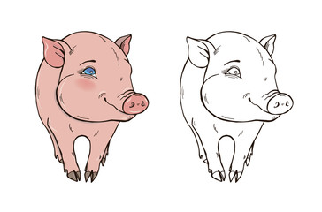 Cute pig in color and black and white, coloring page, vector illustration