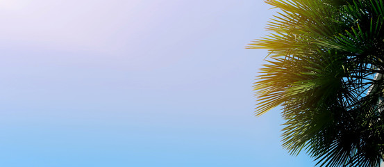 Wall Mural - Website banner with copy space in blue color and palm tree. Concept of Los Angeles and cheap travel agency, summer blog header.